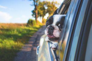 auto repair pets